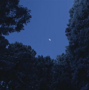 森の中の観月 大峰山の写真素材 [FYI03346557]