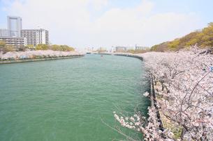 大川と桜之宮公園の桜の写真素材 [FYI03346748]