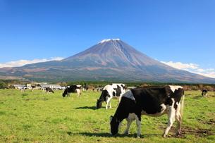 富士山 朝霧高原 の写真素材 [FYI03346886]