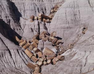 化石の森 ペトリファイドフォレストNPの写真素材 [FYI03346970]