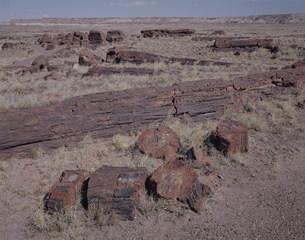 化石の森 ペトリファイドフォレストNPの写真素材 [FYI03346976]