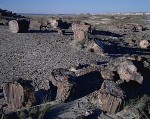 化石の森 ペトリファイドフォレストNPの写真素材 [FYI03346979]