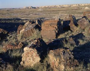 化石の森 ペトリファイドフォレストNPの写真素材 [FYI03346982]