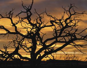 アーチーズ国立公園の潅木の写真素材 [FYI03346996]