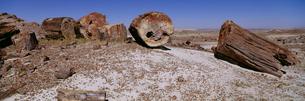 化石の森 ペトリファイドフォレスト国立公園の写真素材 [FYI03347157]