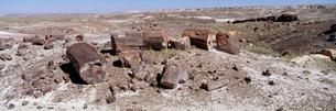 化石の森 ペトリファイドフォレスト国立公園の写真素材 [FYI03347164]