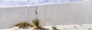ユッカと砂漠 ホワイトサンズ国定記念物の写真素材 [FYI03347167]