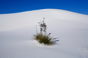 ホワイトサンズ ホワイトサンズNPの写真素材 [FYI03347479]