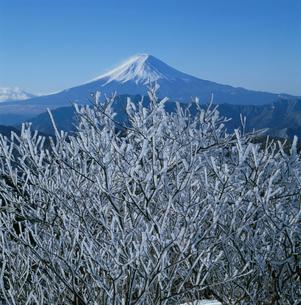 白谷丸の霧氷と富士山の写真素材 [FYI03347664]