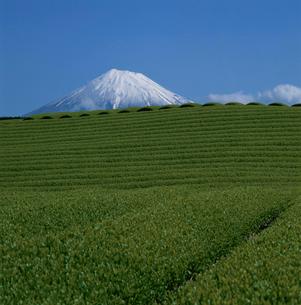 茶畑と富士山の写真素材 [FYI03347681]