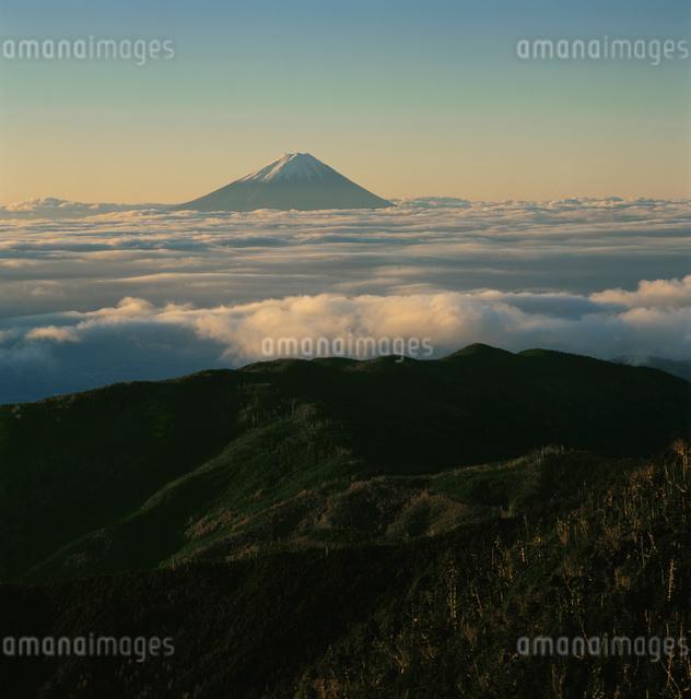 国師ヶ岳の雲海の朝焼けと富士山の写真素材 [FYI03347726]