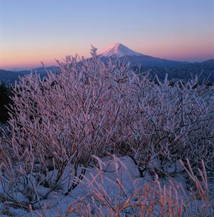 白谷丸の霧氷と朝焼けの富士山の写真素材 [FYI03347731]