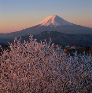 白谷丸の霧氷と朝焼けの富士山の写真素材 [FYI03347732]