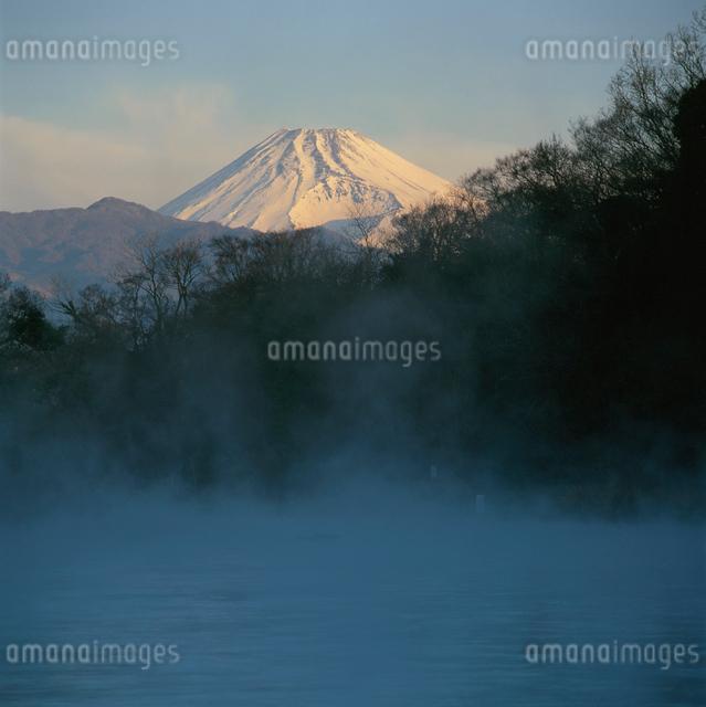 柿田川の川霧と朝焼けの富士山の写真素材 [FYI03347752]