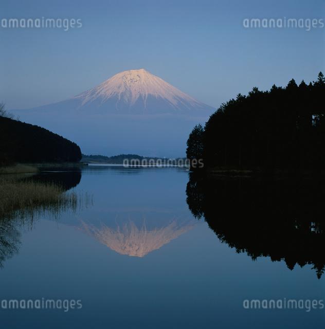 田貫湖から望む逆さ富士の写真素材 [FYI03347767]