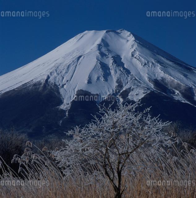 忍野村の霧氷と富士山の写真素材 [FYI03347770]