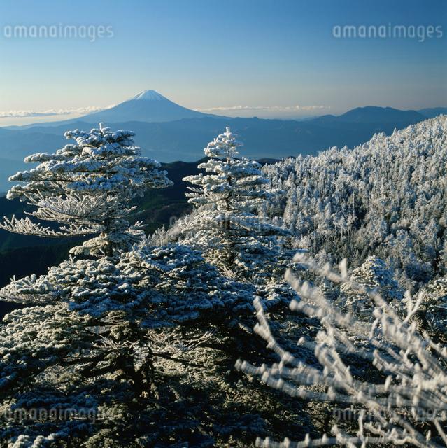 国師ヶ岳の霧氷と富士山の写真素材 [FYI03347772]