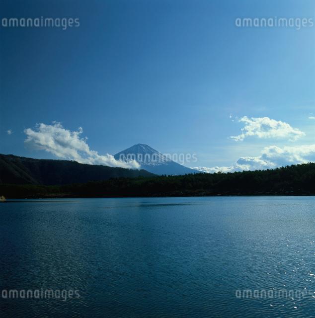 西湖から望む快晴の富士山の写真素材 [FYI03347780]