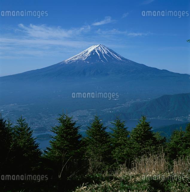 すずらん峠のカラマツと富士山の写真素材 [FYI03347796]