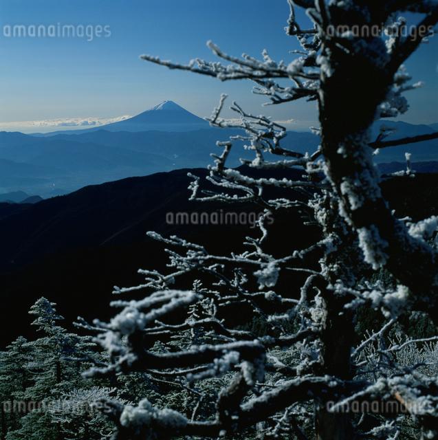国師ヶ岳の霧氷と富士山の写真素材 [FYI03347797]