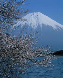 田貫湖の富士桜と富士山の写真素材 [FYI03347798]
