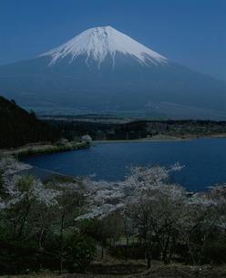 田貫湖の桜と富士山の写真素材 [FYI03347802]