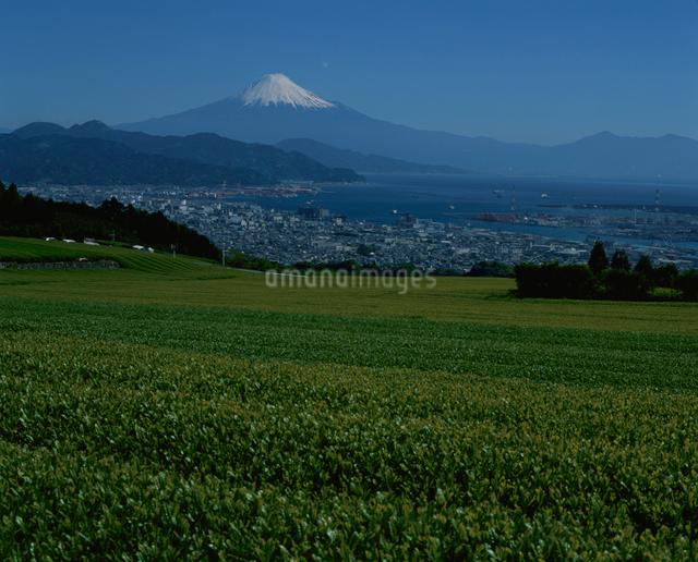 日本平の茶畑と富士山の写真素材 [FYI03347806]