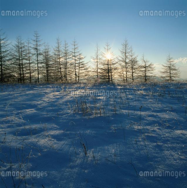 三ッ峠の雪景色とカラマツと朝日の写真素材 [FYI03347812]