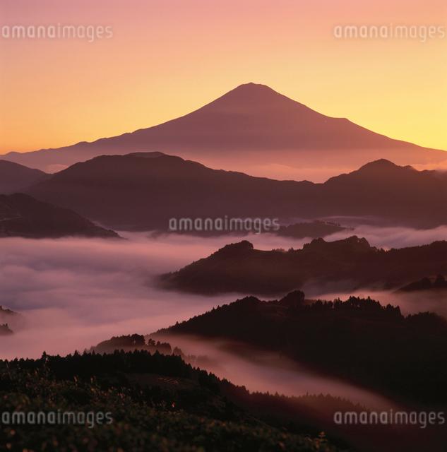 吉原の雲海と朝焼けの富士山の写真素材 [FYI03347840]