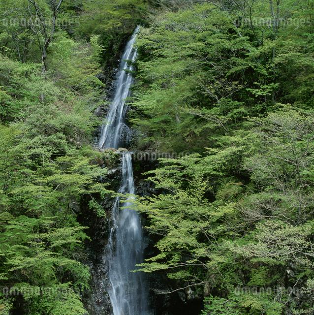 十谷温泉大柳川渓谷の銚子口二段滝の写真素材 [FYI03347845]