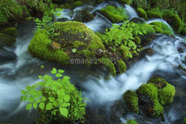 春の清流の写真素材 [FYI03347898]