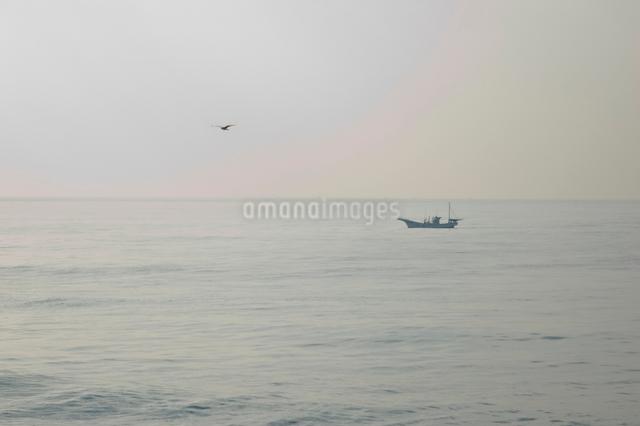 海岸より望む漁船とカモメの写真素材 [FYI03347924]