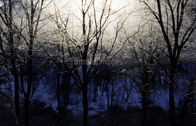 霧氷の木立の写真素材 [FYI03347929]