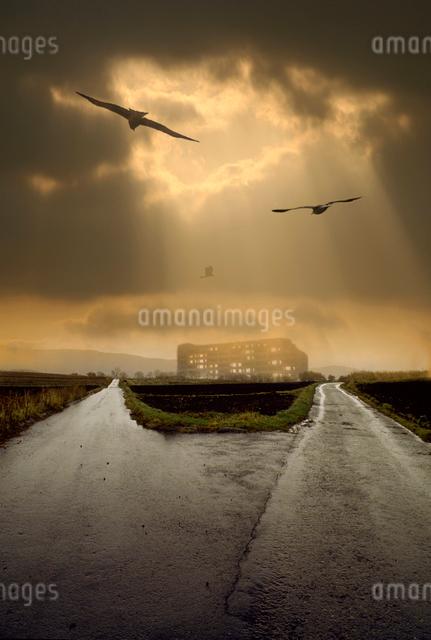 分かれ道の上を飛ぶ3羽の鳥の写真素材 [FYI03347930]