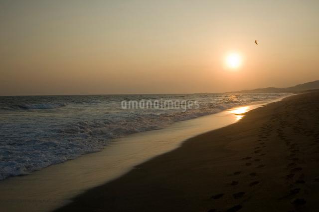 砂浜の夕日とトンビの写真素材 [FYI03347944]