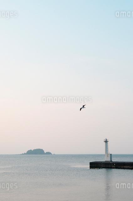 カモメが飛ぶ夕暮れの港 川奈港の写真素材 [FYI03347946]