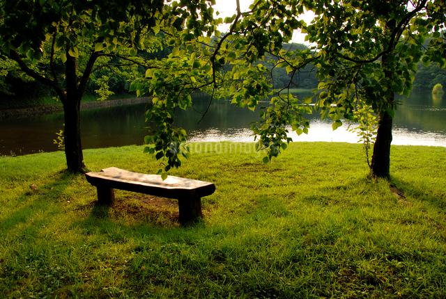 湖畔のベンチ 一碧湖 伊豆高原の写真素材 [FYI03347957]