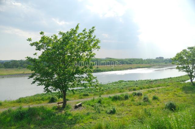 五月の多摩川の写真素材 [FYI03347967]