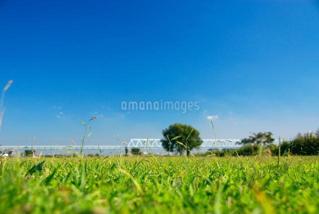 草原と鉄橋の写真素材 [FYI03347974]