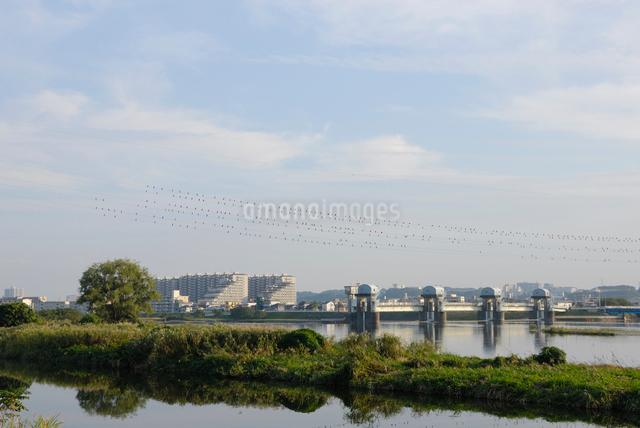 秋の多摩川 二ヶ領上河原堰堤の写真素材 [FYI03347999]
