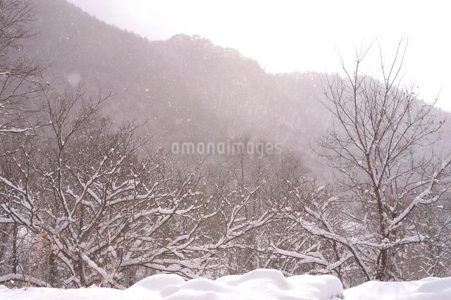 雪が舞う山林の写真素材 [FYI03348009]
