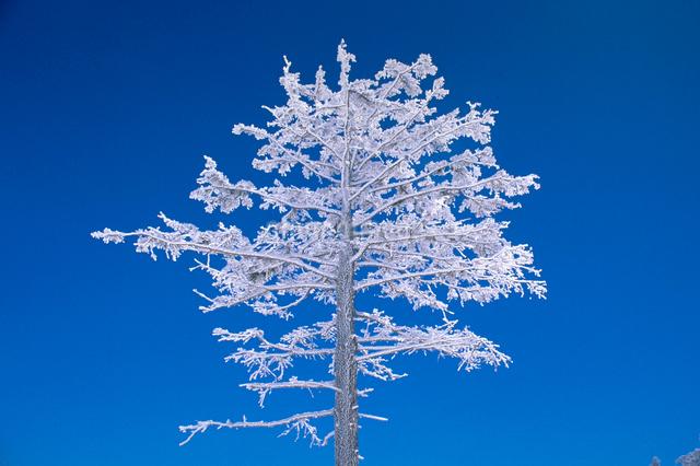 四阿山の霧氷の写真素材 [FYI03348031]