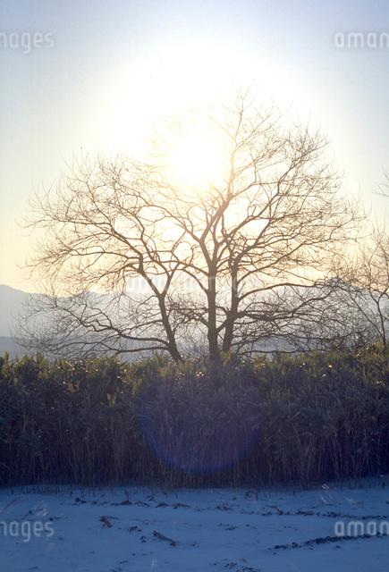 輝く木立の写真素材 [FYI03348033]