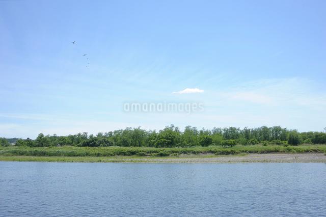 野鳥が飛ぶ五月晴れの多摩川の写真素材 [FYI03348038]