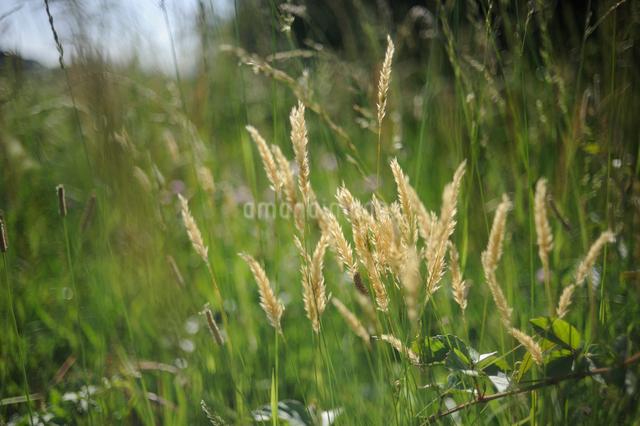 五月の野草の写真素材 [FYI03348046]