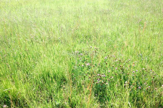 五月の草原の写真素材 [FYI03348059]