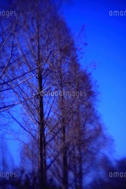 落葉した広葉樹の並木の写真素材 [FYI03348080]