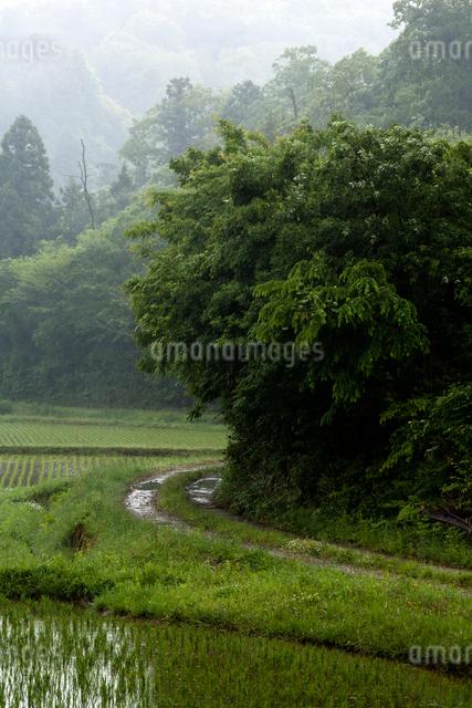 雨降りの轍道の写真素材 [FYI03348093]