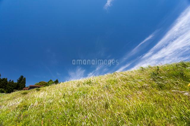 草原を渡る風とスジ雲の写真素材 [FYI03348096]