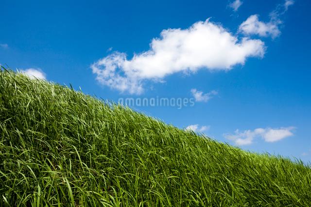 風渡る草原と浮浪雲の写真素材 [FYI03348118]
